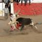 Bullfight in Peru photo by Kirsten Koza