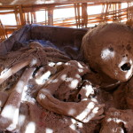 Peru, mummified baby, in Nazca garden shed. (Photo by Kirsten Koza)