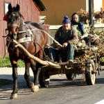 Horse wagons are a common in Romania (Photo by Kirsten Koza)