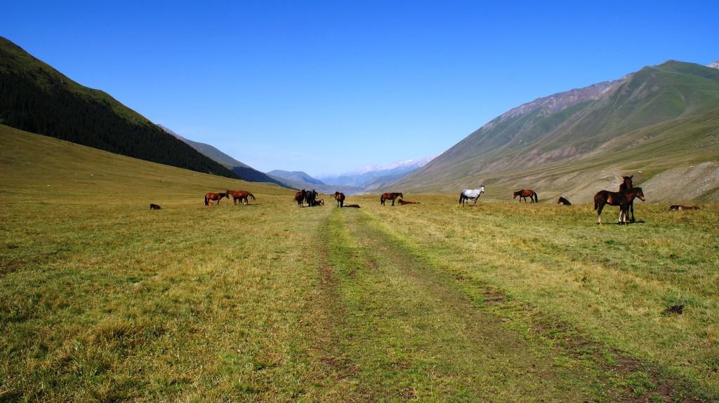 They had lots of horses. (Photo by Kirsten Koza)