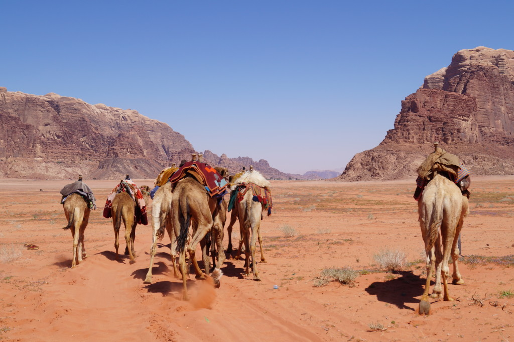 Your camel awaits - Wadi Rum. (Photo by Kirsten Koza, Writers' Expeditions)