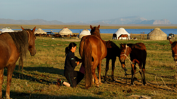 Woman milks a horse. I was back in Kyrgyzstan to take photos of nomadic life (Photo by Kirsten Koza)